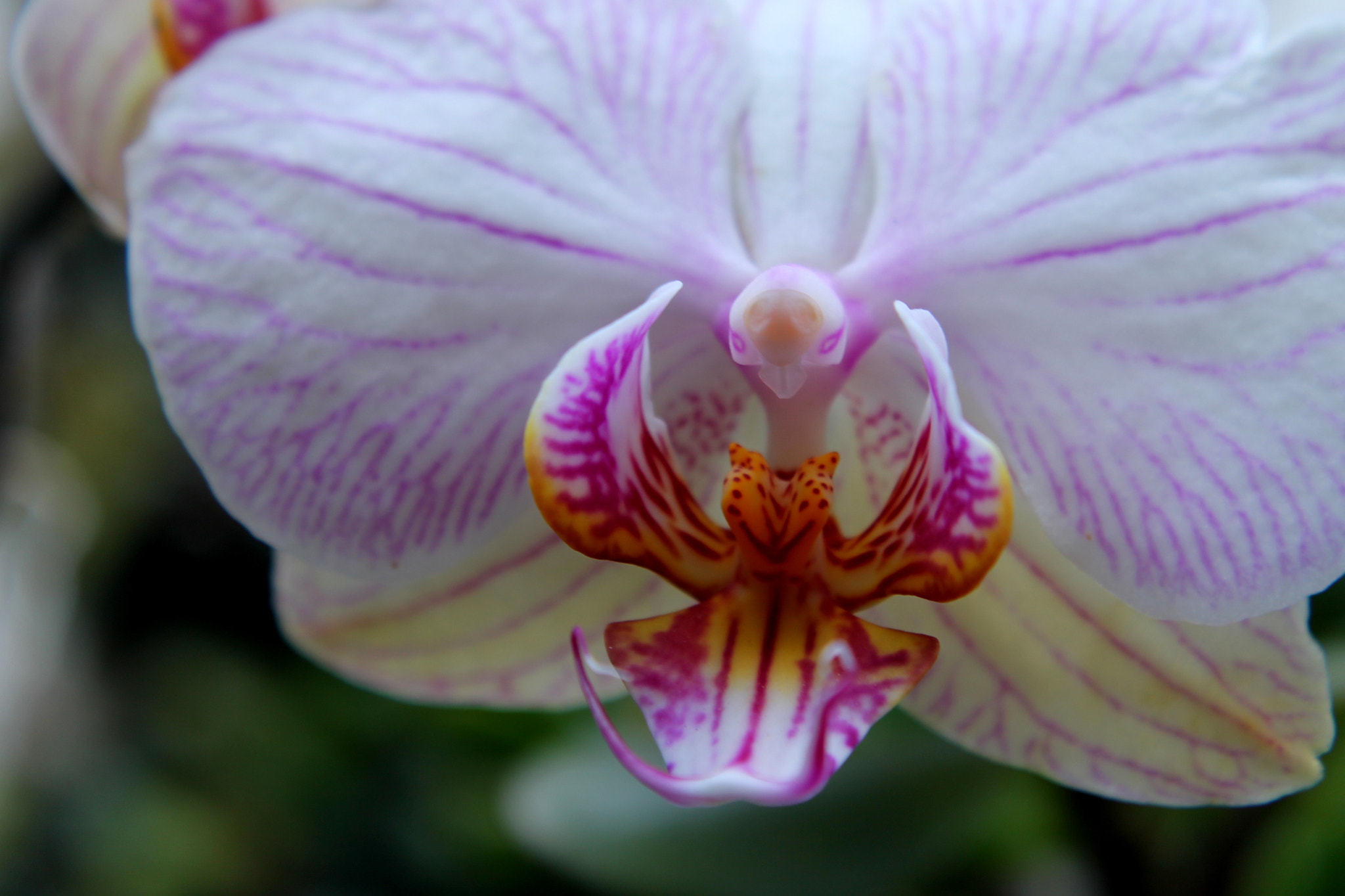 Photograph Orchid by Monique K. on 500px