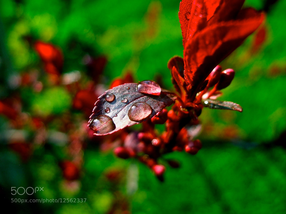 Photograph Red Drops by Vin (subwarm) on 500px