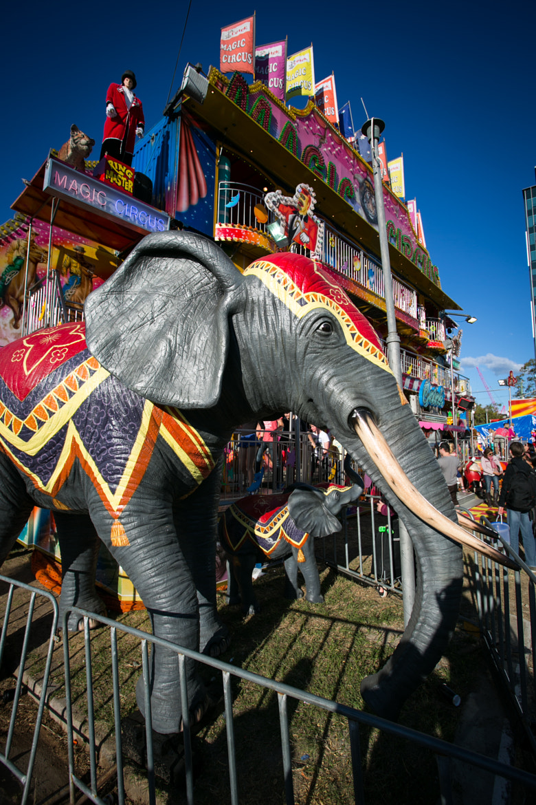 Photograph Ekka Elephant by Christopher Mayhew on 500px