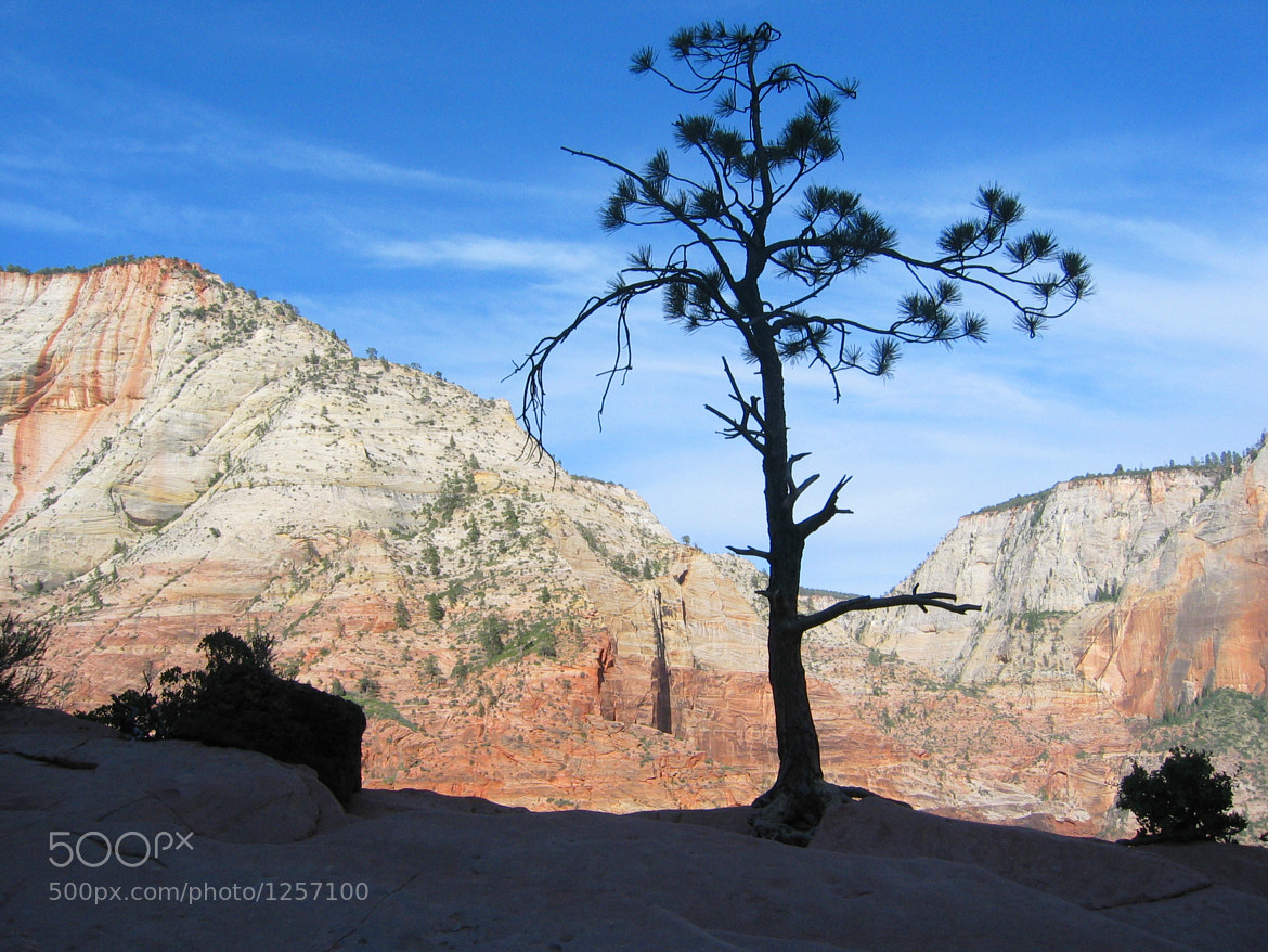 Photograph Zion tree by Hiep Le on 500px