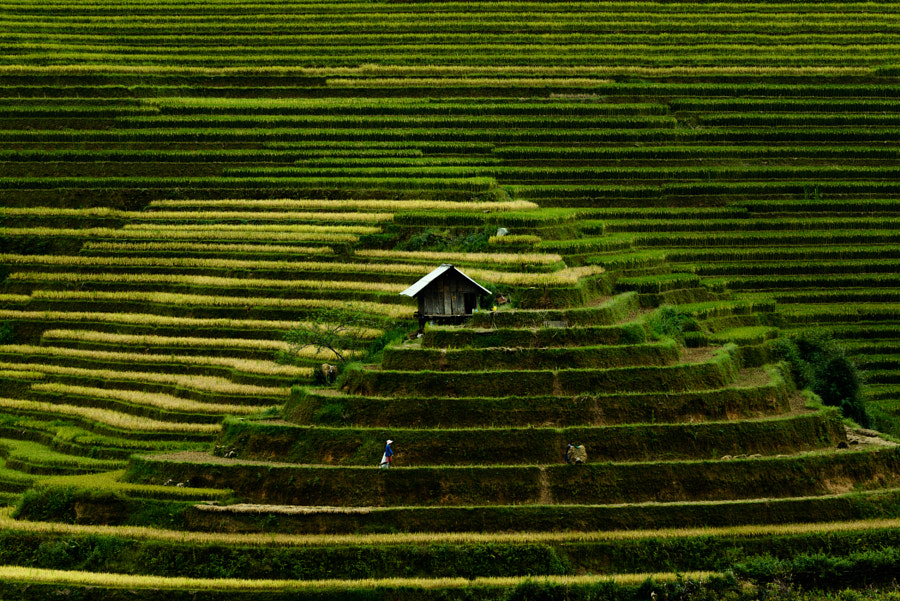 Life on the hill by Tippawan Kongto on 500px.com