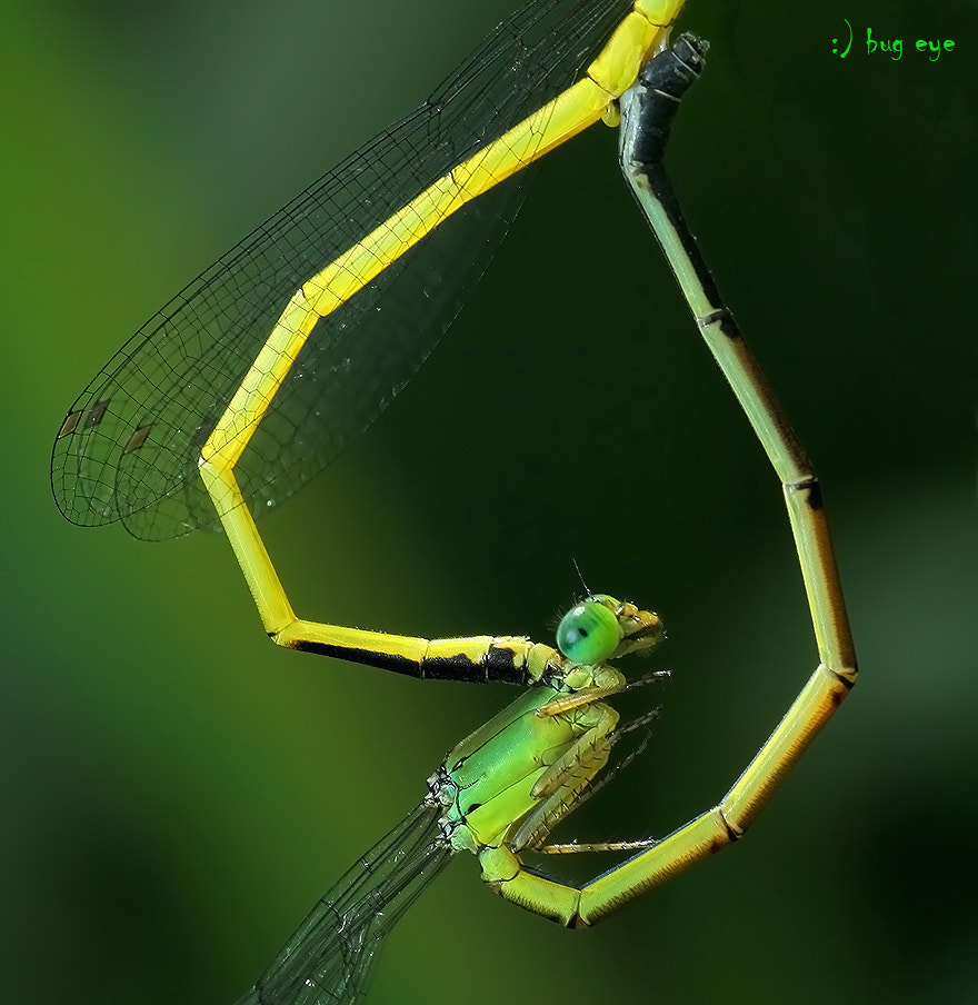 Photograph ~ green heart ~ by bug eye :) on 500px