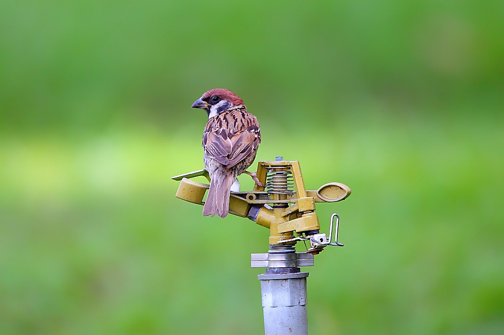 Photograph thirsty by Dajan Chiou on 500px