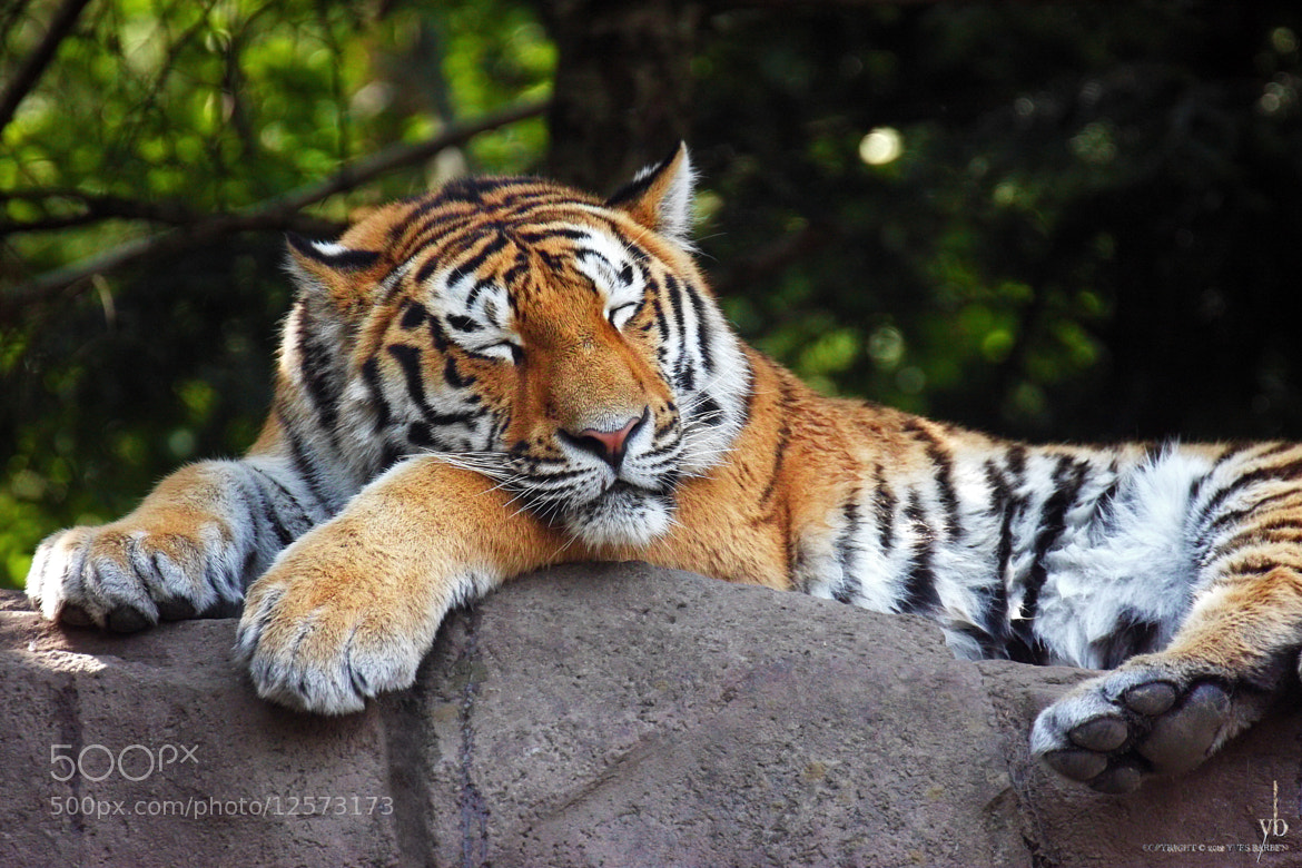 Photograph sleeping by y b on 500px