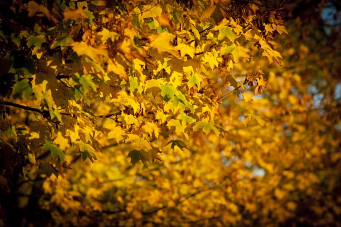 Autumn Vibe