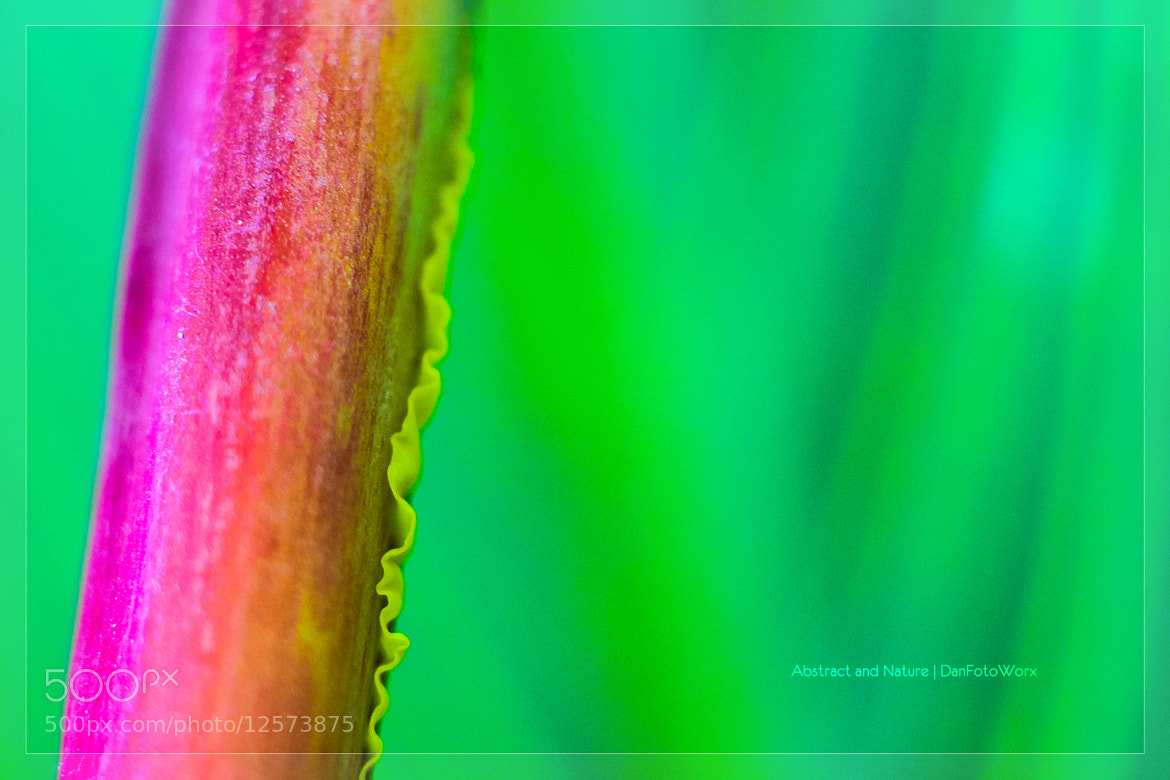 Photograph Abstract and Nature #5 by Dan FotoWorx on 500px