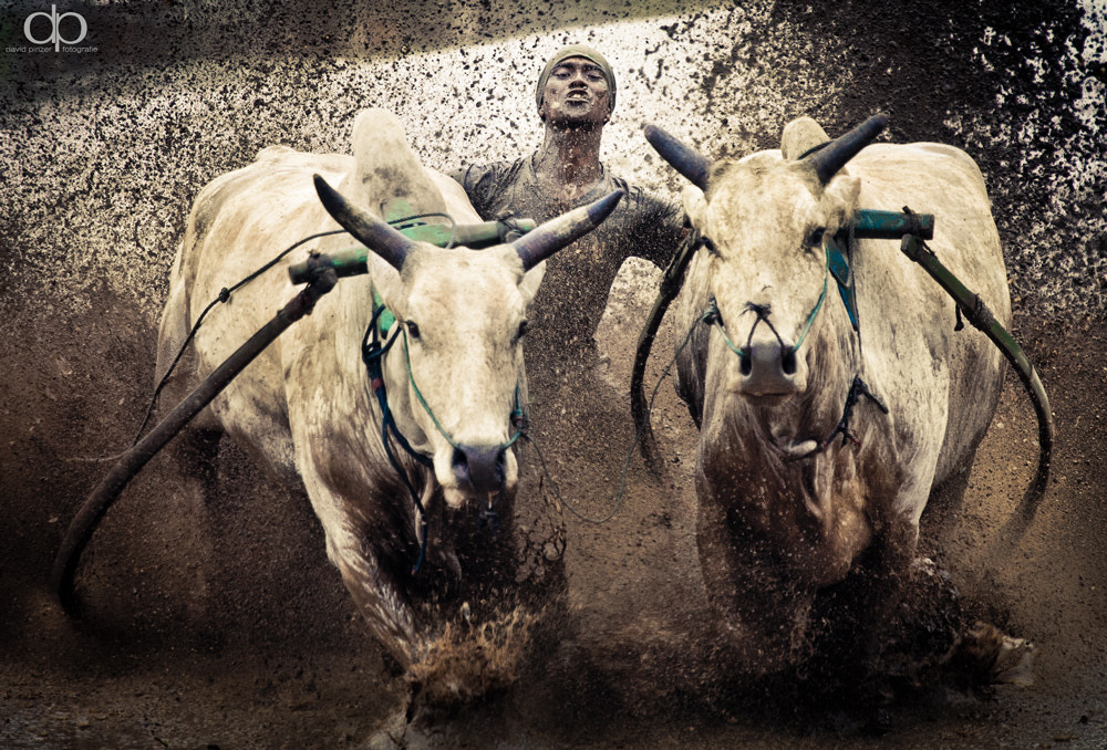 Photograph Bull Race by David Pinzer on 500px