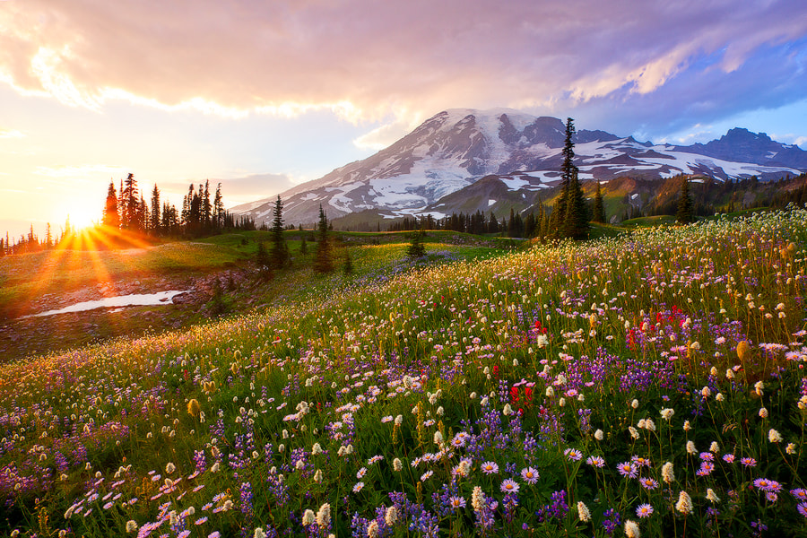 Photograph The Smell of Wildflowers by Danny Seidman on 500px