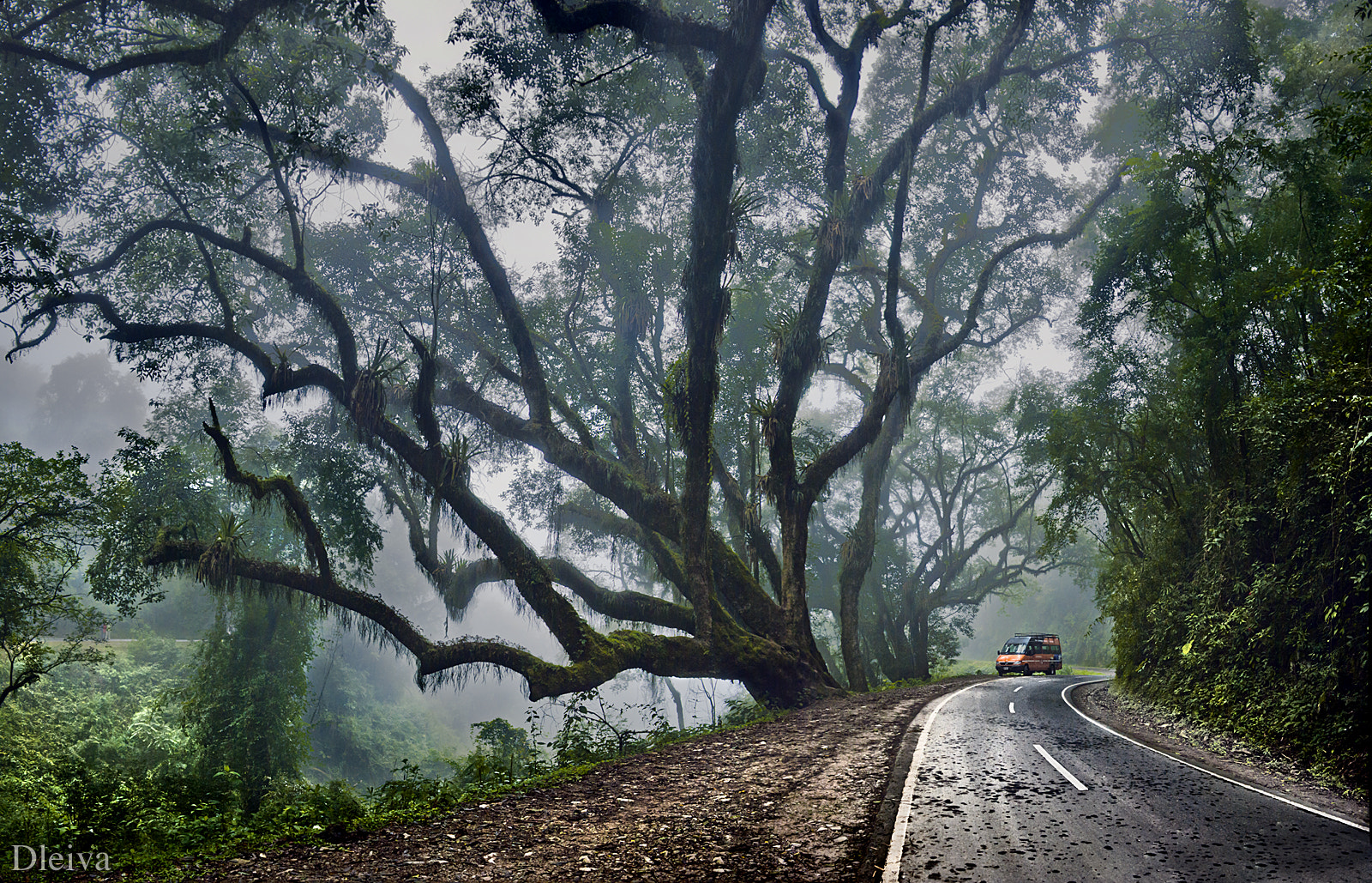 Photograph Cloud Forest (Calilegua National Park, Jujuy, Argentina) by Domingo Leiva on 500px