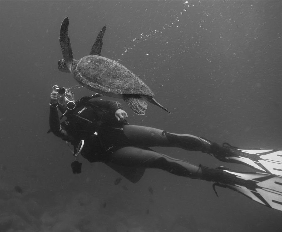 Diving with turtles by caqi on 500px.com