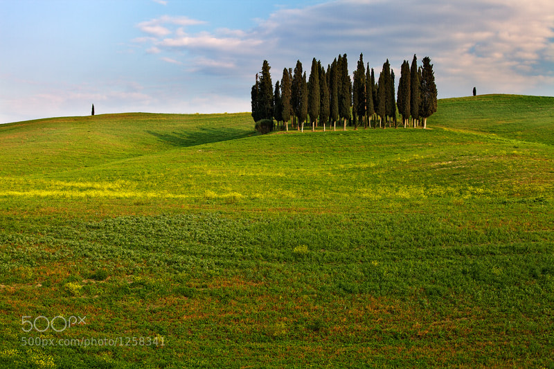 Photograph Cypress Trees by Martin Rak on 500px
