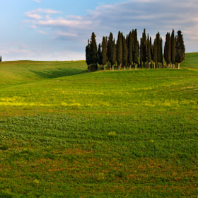 Cypress Trees by Martin Rak (martas)) on 500px.com