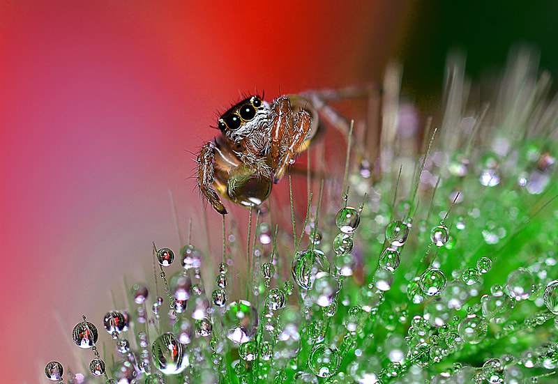 Photograph ..On Drops Way.. by Bu Balus on 500px