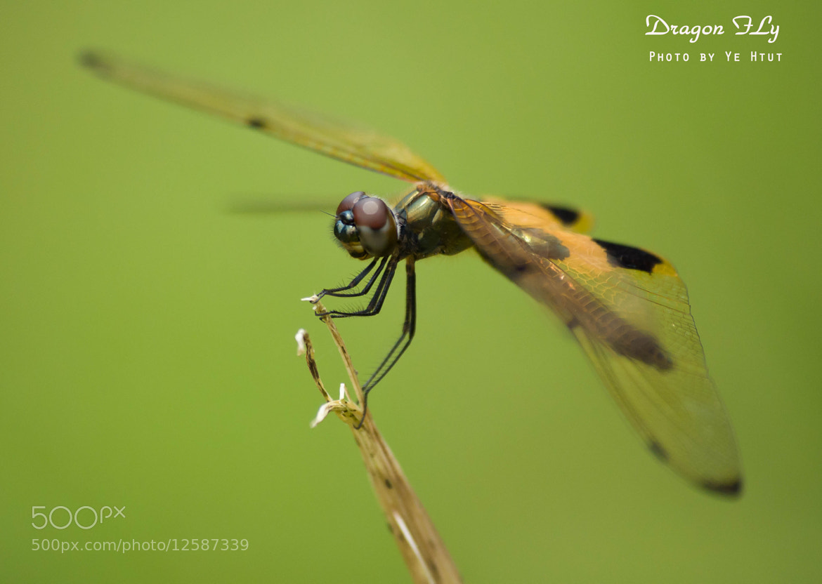 Photograph Dragon Fly by Ye Htut on 500px
