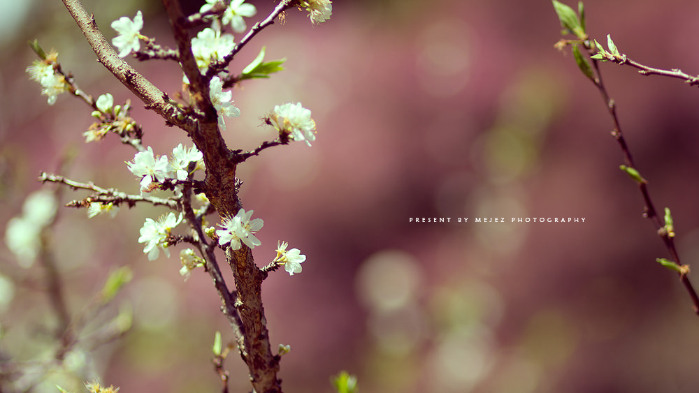 Photograph Flower by Mejez Ritch | Photography on 500px