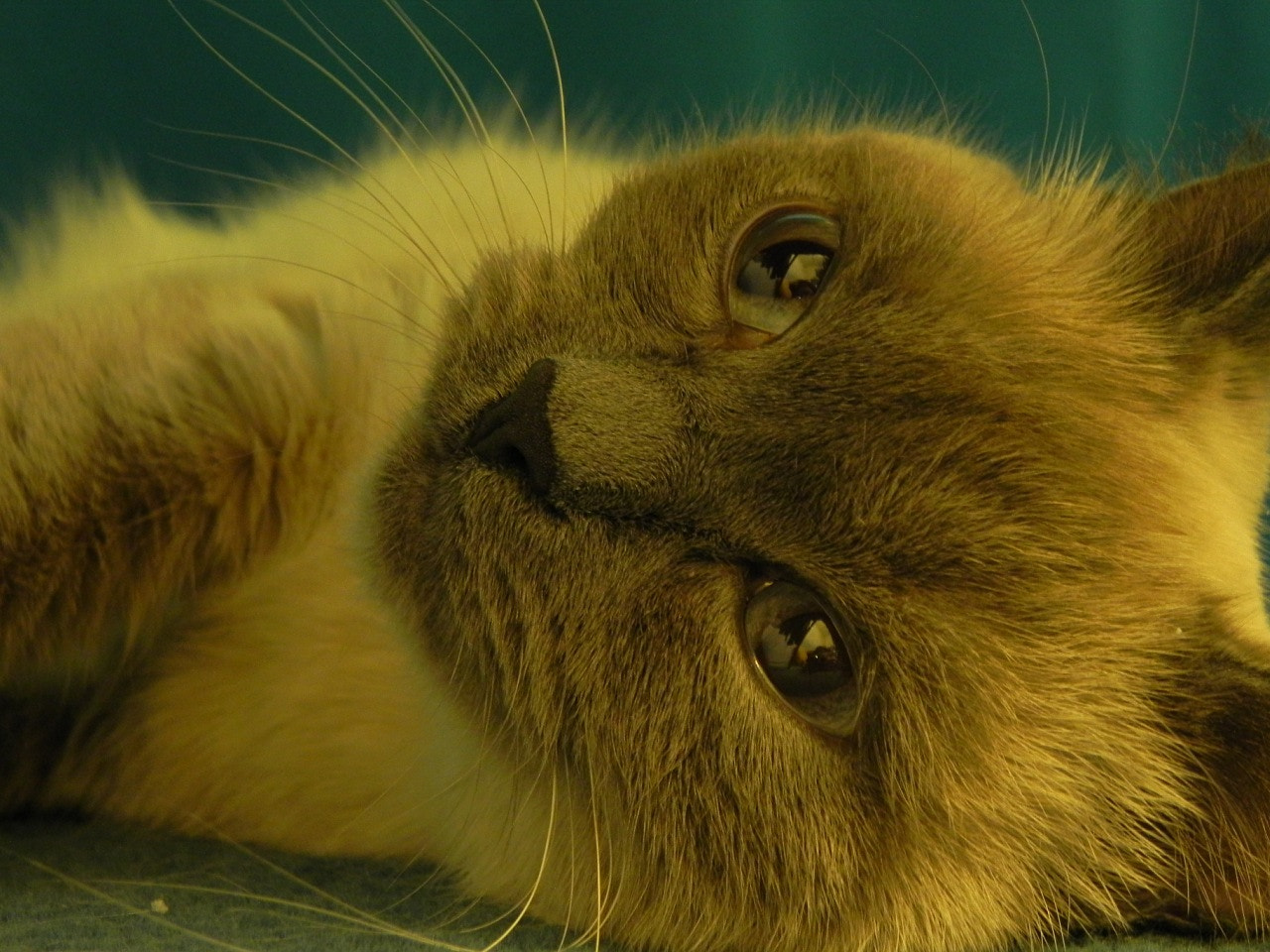 Photograph cat by Eleana Der on 500px