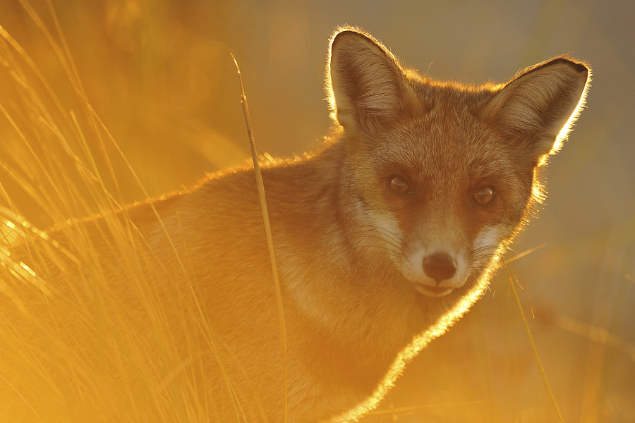 500px Blog » 39 Magical Photos Of Animals Captured During