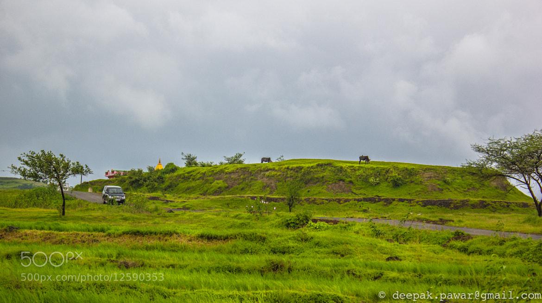 Photograph Cattle grazing near Pavana dam, Pune by Deepak Pawar on 500px