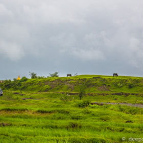 Cattle grazing near Pavana dam, Pune by Deepak Pawar (dpphotos)) on 500px.com