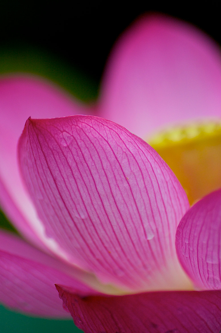 Photograph LOTUS by Jim  Mayes on 500px