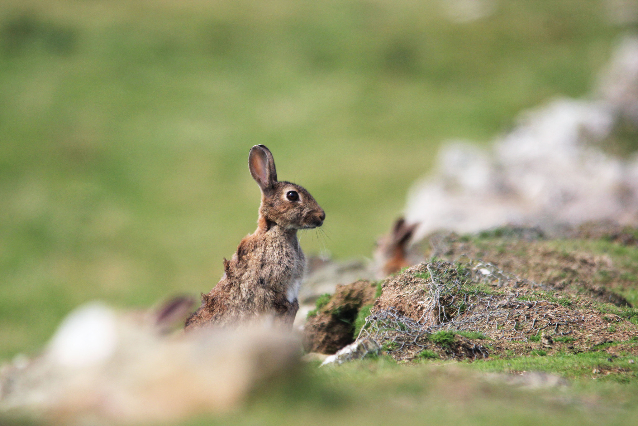 Photograph Rabbit on guard by Arnie Monteith on 500px