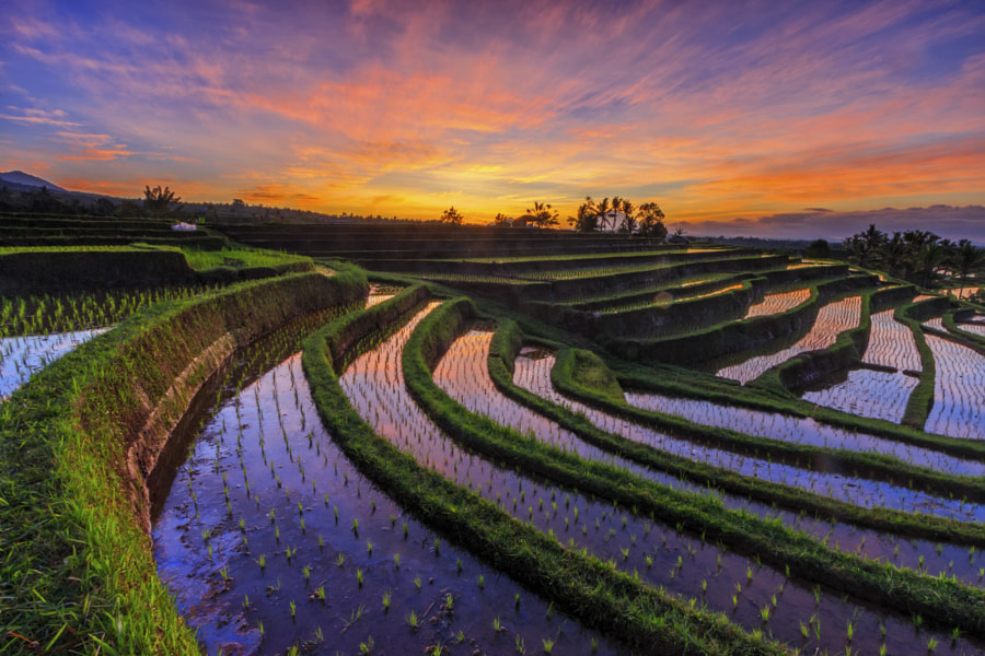 The Leading Line of Rice Terrace by Gede Suyoga on 500px.com