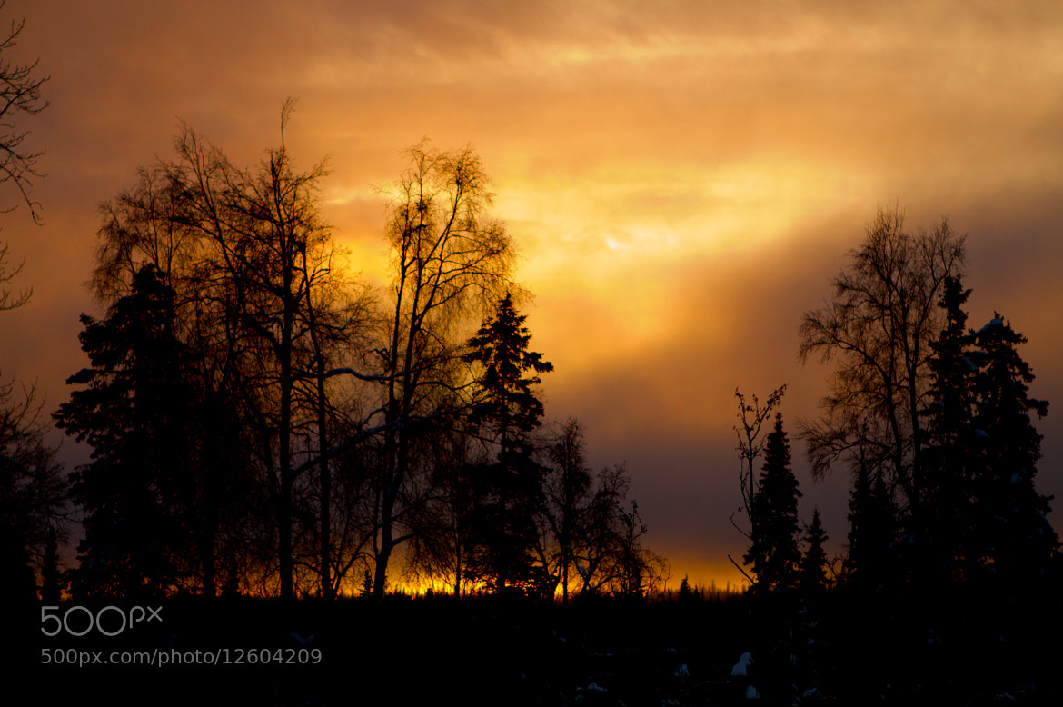 Photograph Sunset in Alaska  by ShantiMix Photography on 500px