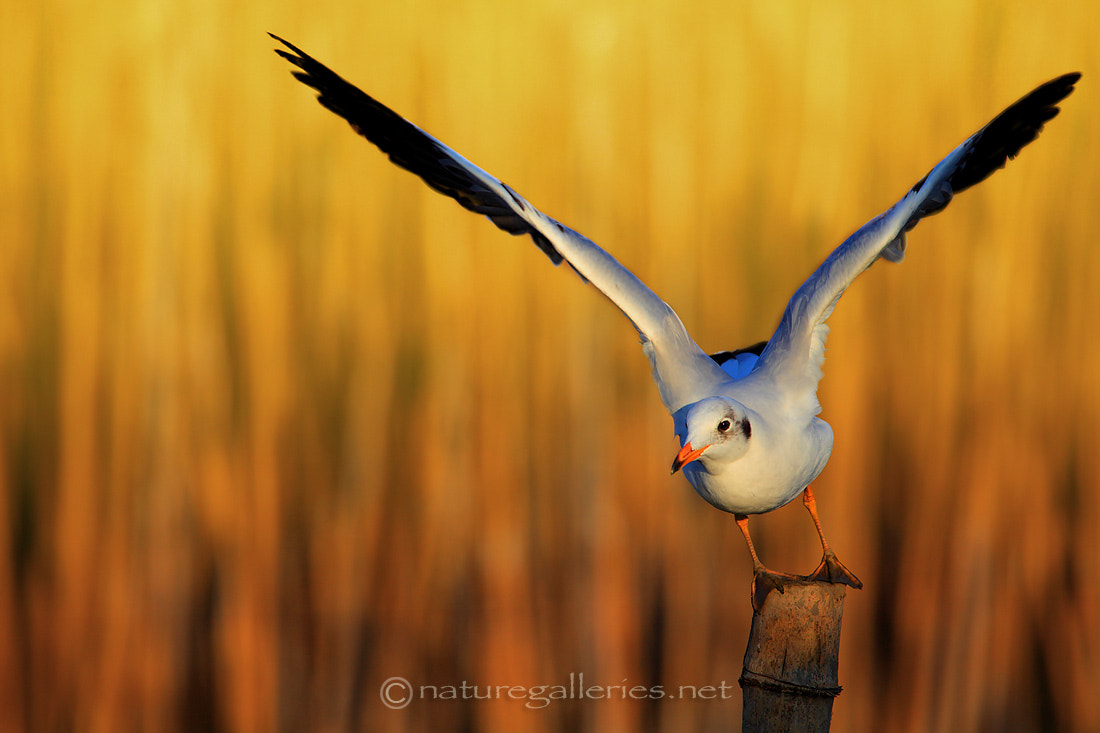 Photograph Flight bird  by Sasi - smit on 500px