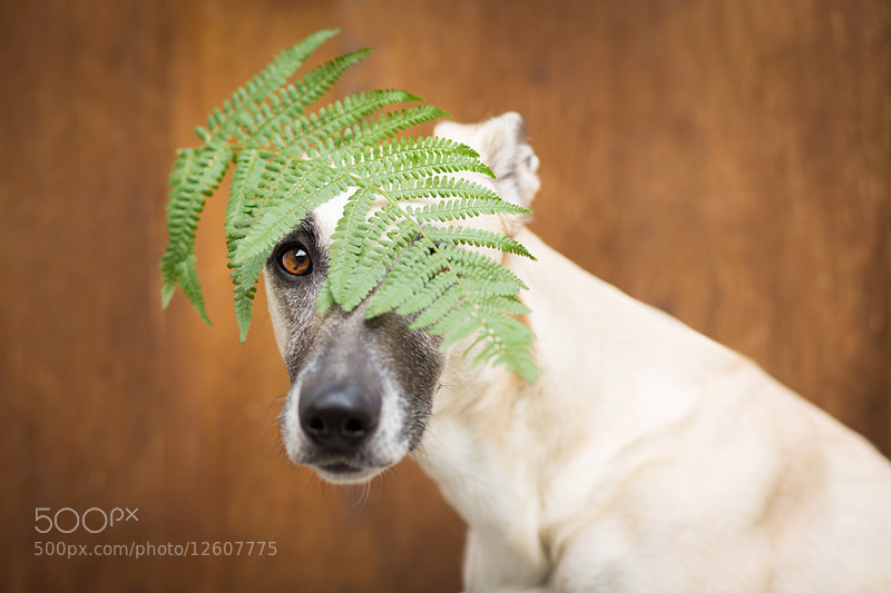 Photograph My fern fairy by Elke Vogelsang on 500px