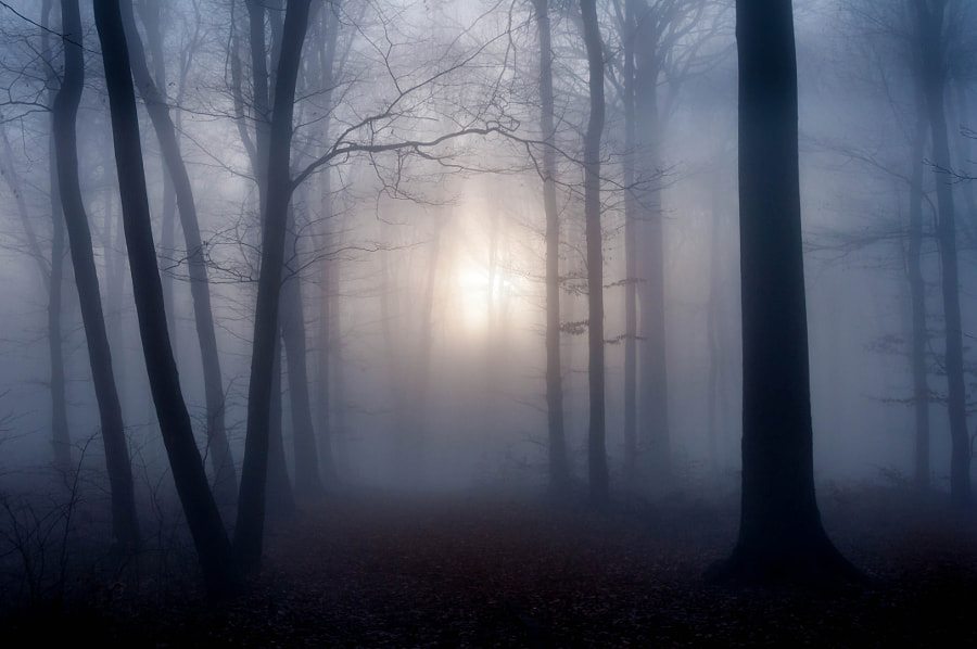 Late Autumn Mist by Csilla Zelko on 500px.com