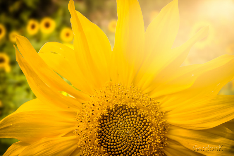Photograph Summertime by Gordonk -Photography on 500px