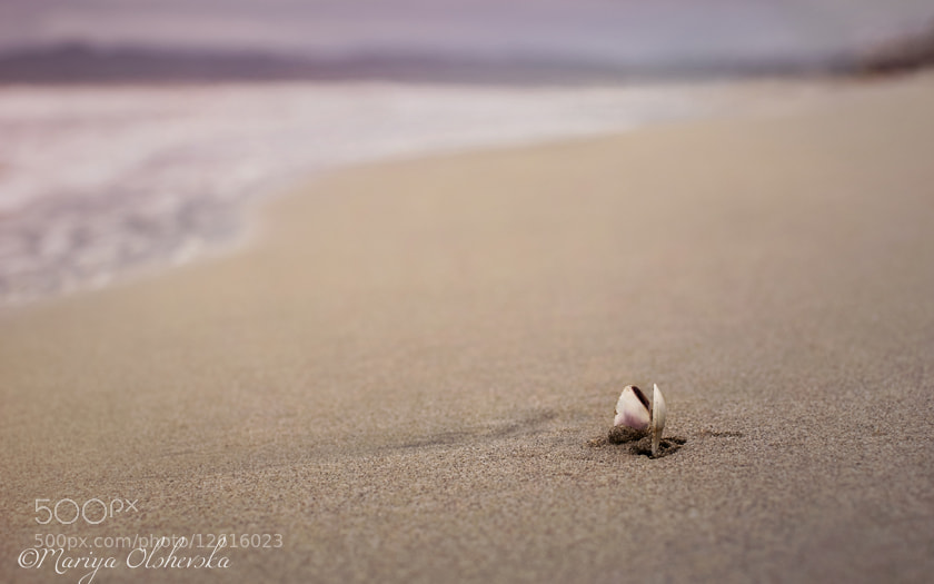 Photograph A Seashell's Repose by Mariya Olshevska on 500px