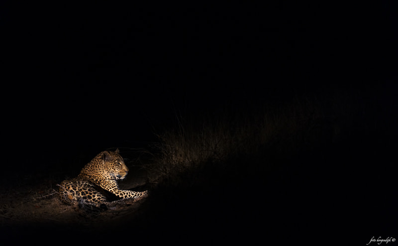 Photograph The silent predator by Frits Hoogendijk on 500px
