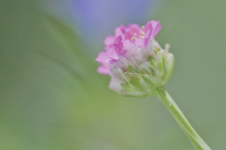 Photograph highly sensitive by Marion Fanieng on 500px