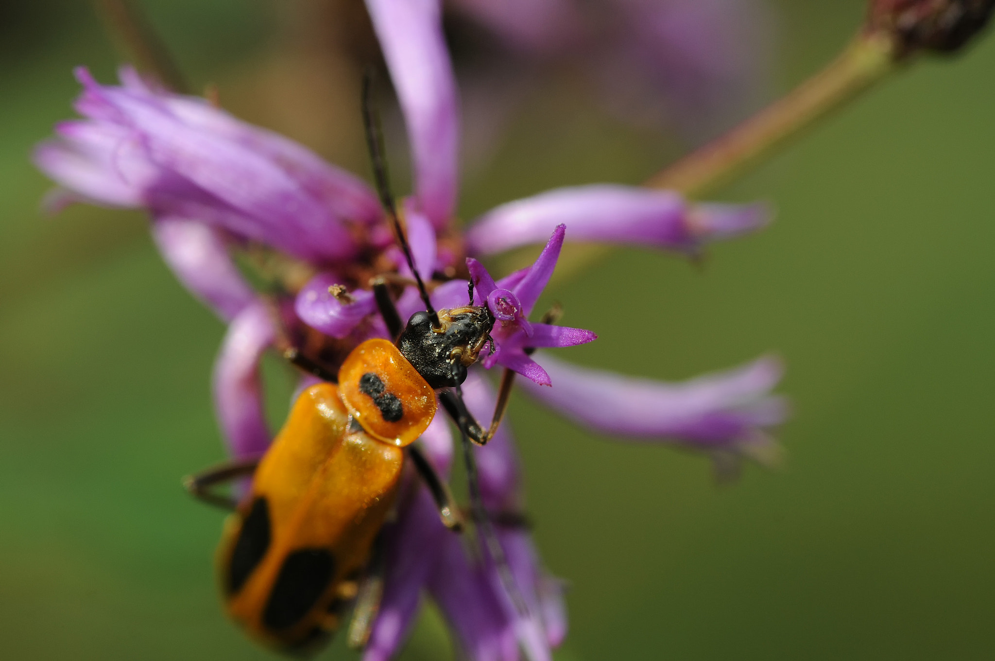 Photograph bug by Mark Kantner on 500px
