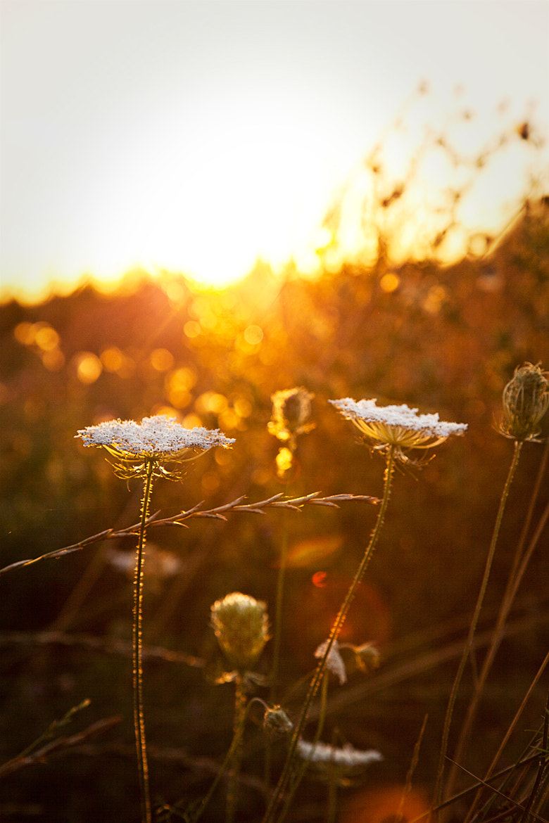 Photograph Snatches of sunshine by Dela Deden on 500px