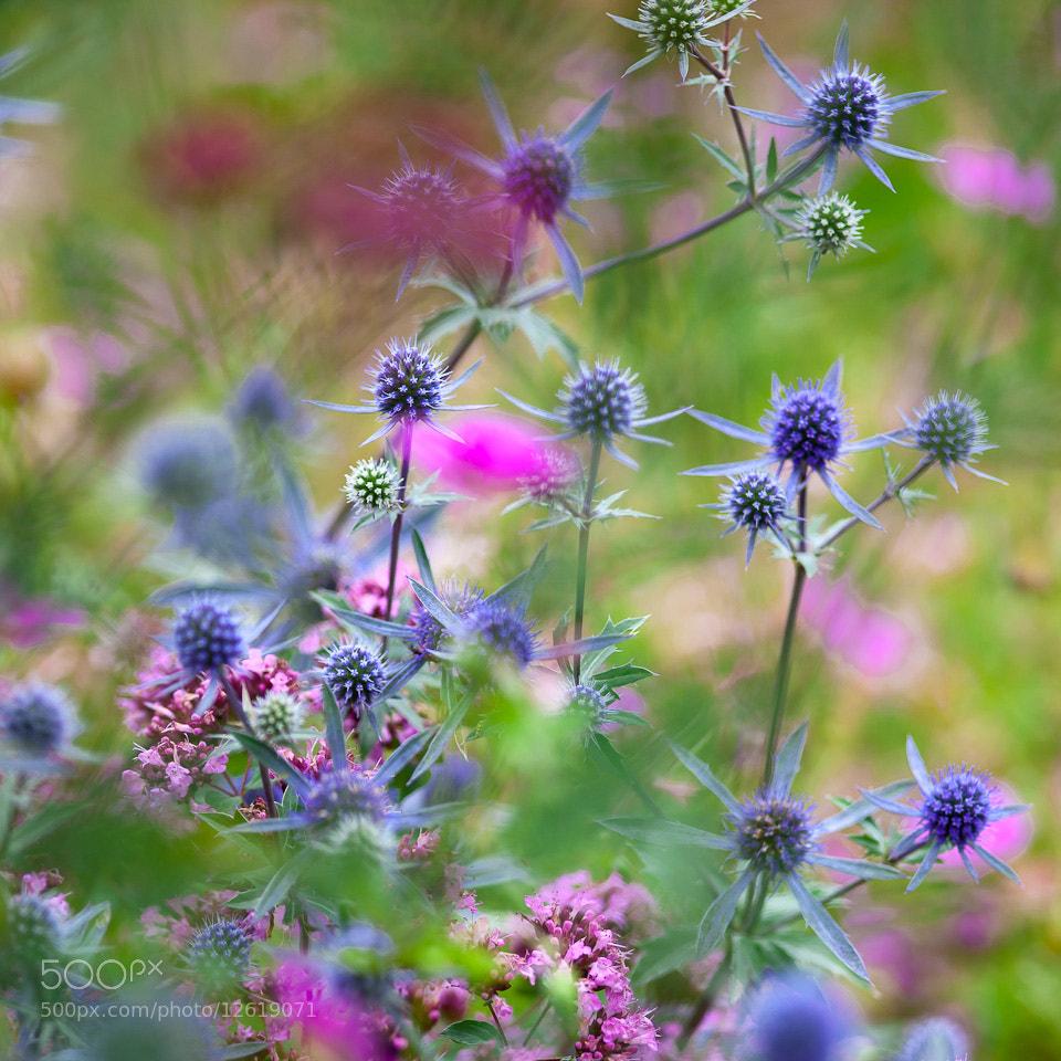 Photograph Kaleidoscope by Richard Loader on 500px