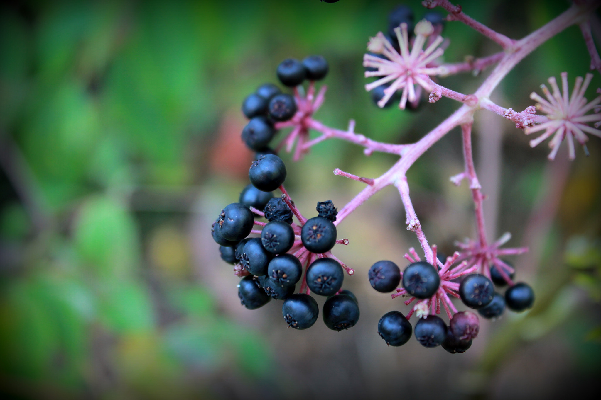 Photograph Not Blueberries... by Andrew Stein on 500px
