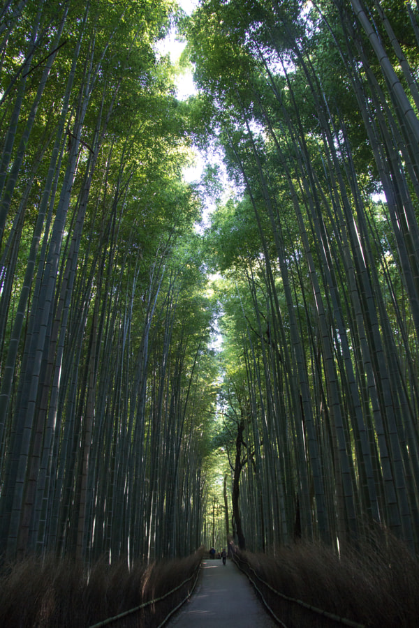 bamboo forest by Naoko Yamamoto on 500px.com