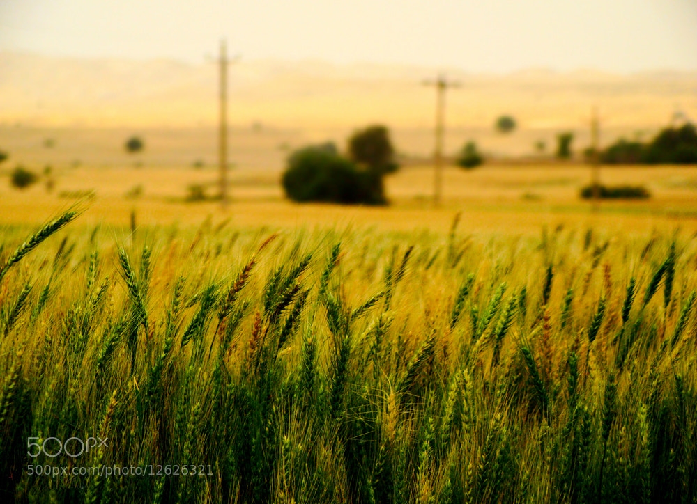 Photograph Golden and Green by Rezvan Irani on 500px