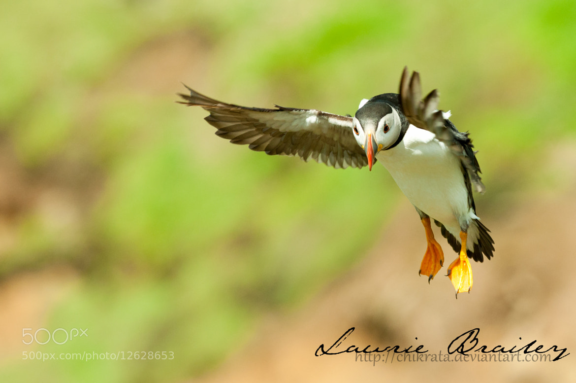 Photograph Coming in to Land by Lawrie Brailey on 500px