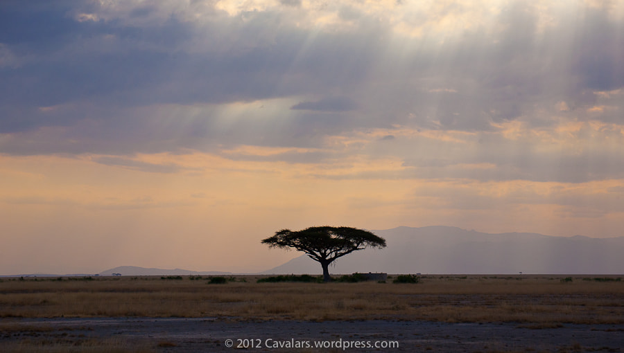 Photograph lonley tree by Luca Rossi on 500px