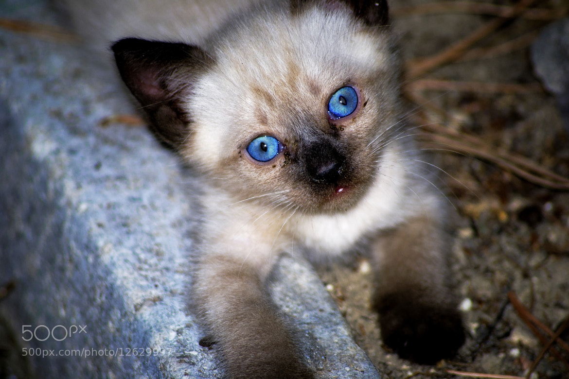 Photograph CAT by Giacomo Zannini on 500px