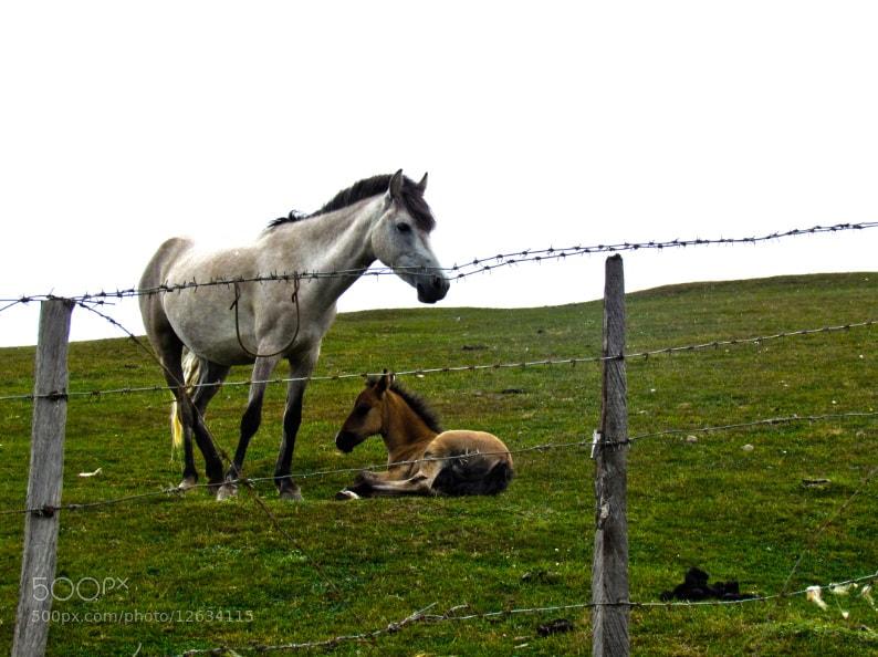 Photograph incredible iran by Zahra Darivandi on 500px