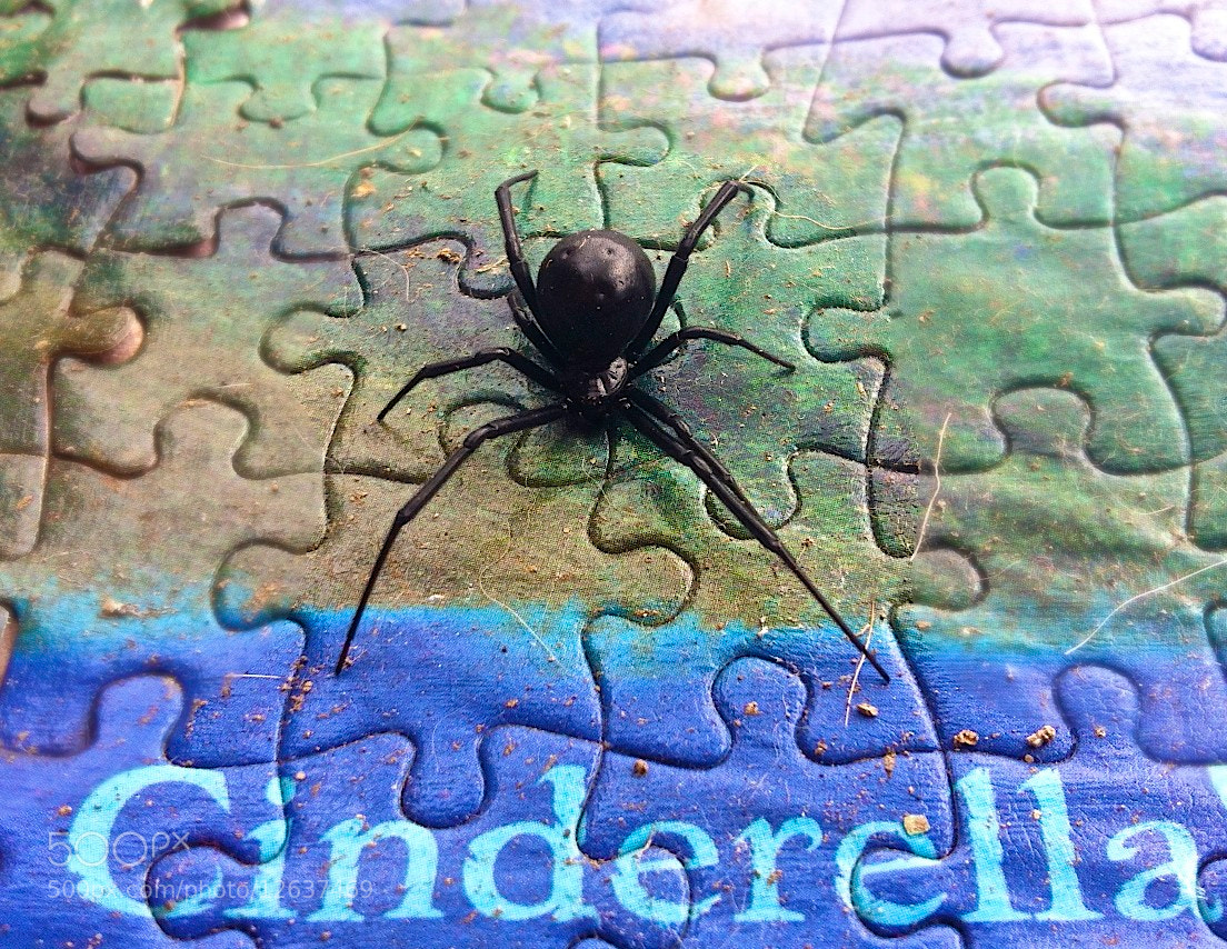 Photograph Cinderella Widow by Leah Stohs on 500px