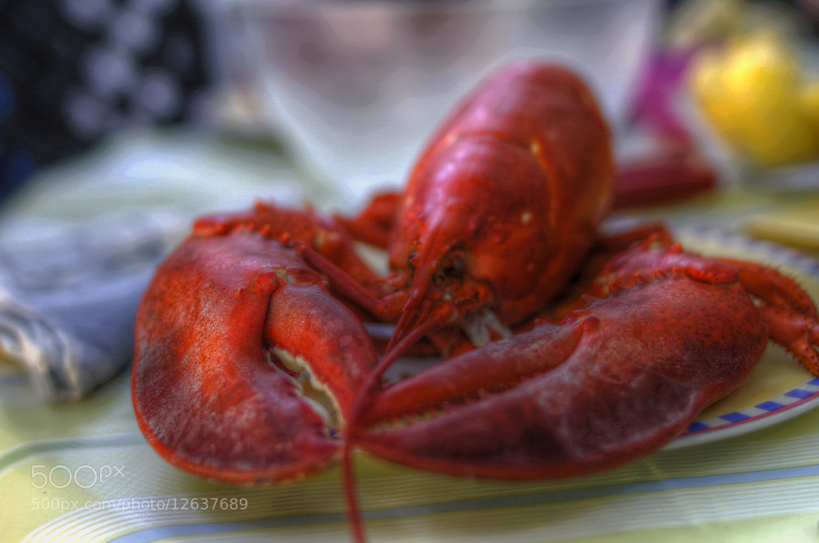 Photograph Bad day for a lobster by Frederick Hartman on 500px