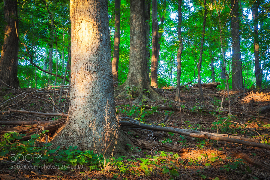Photograph The Woods on Indian Hill, West Newbury, Massachusetts by Stanton Champion on 500px