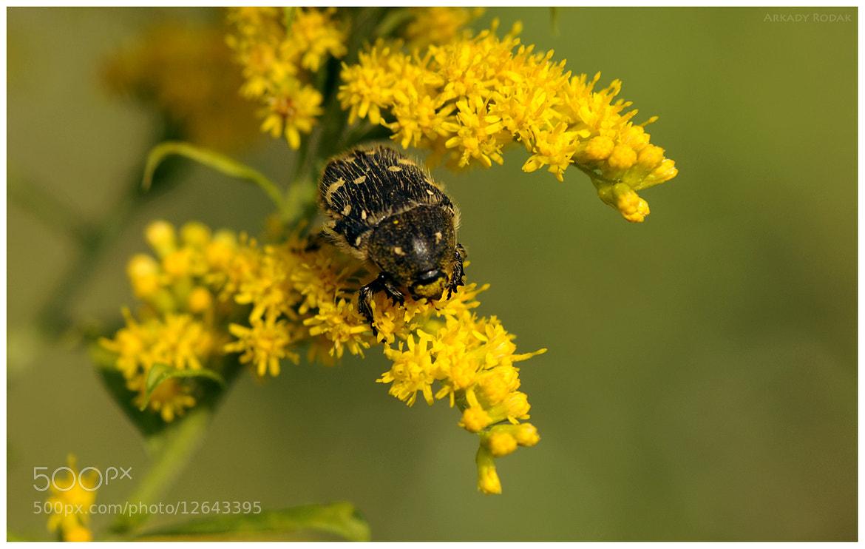 Photograph Bug and Flower by Arkady Rodak on 500px
