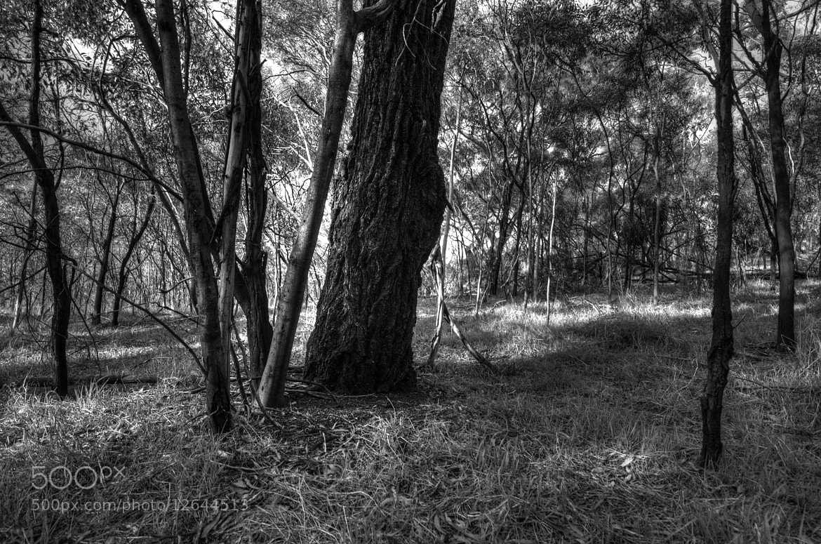 Photograph Studley Park, Melbourne by Mark  on 500px