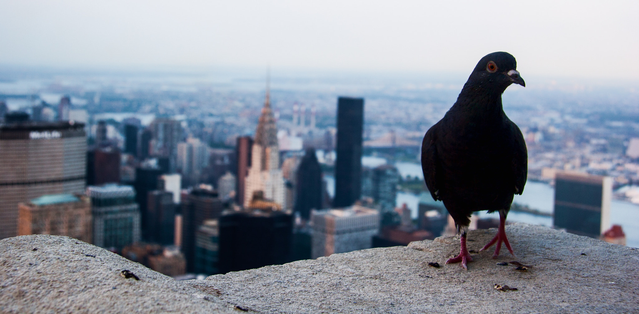 Photograph Pigeon Penthouse by Christopher Mayhew on 500px